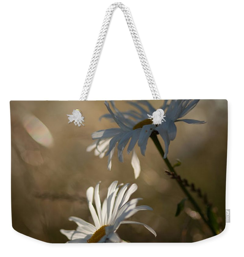 Flower Weekender Tote Bag featuring the photograph Sunlit Daisies by Mike Reid