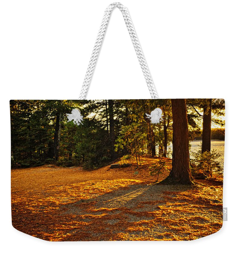 Trees Weekender Tote Bag featuring the photograph Sunset In Woods At Lake Shore by Elena Elisseeva
