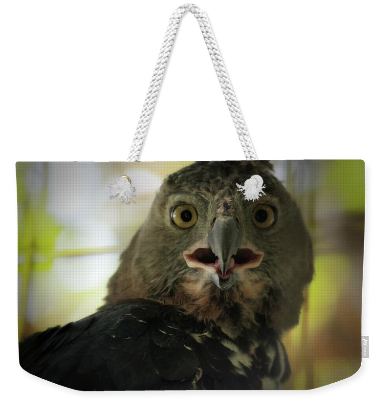 Eagle Weekender Tote Bag featuring the photograph Surprized by Douglas Barnard