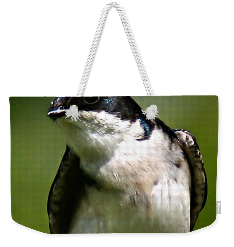 Animals Weekender Tote Bag featuring the photograph Swallow by Jean Noren