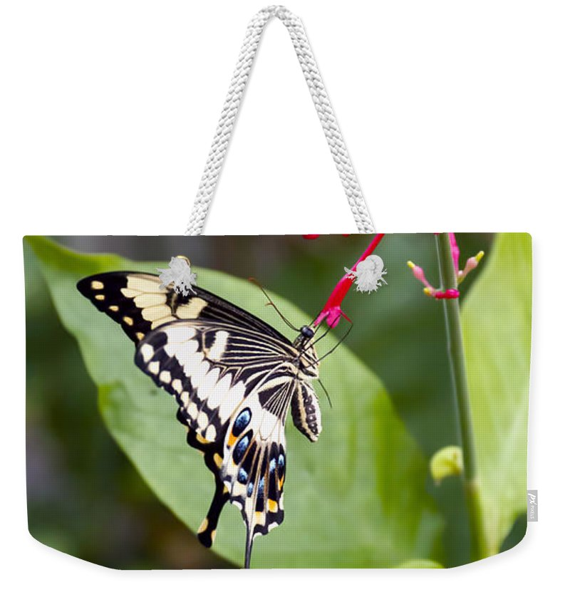 Nature Weekender Tote Bag featuring the photograph Swallowtail Butterfly by Linda Tiepelman