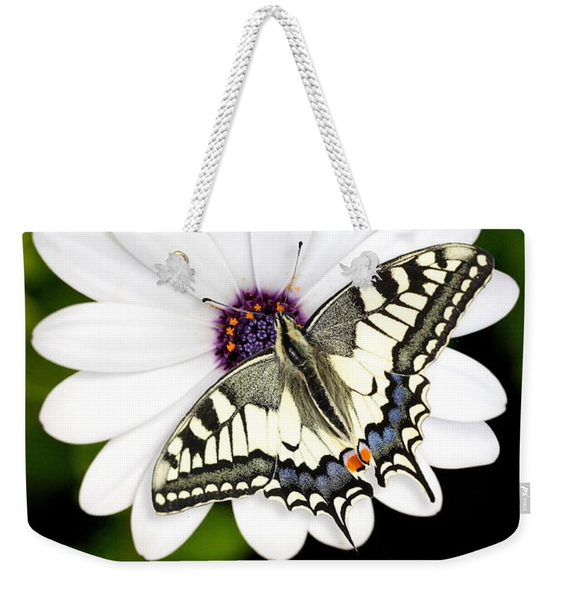 Nature Weekender Tote Bag featuring the photograph Swallowtail Butterfly Resting by Mark Heywood