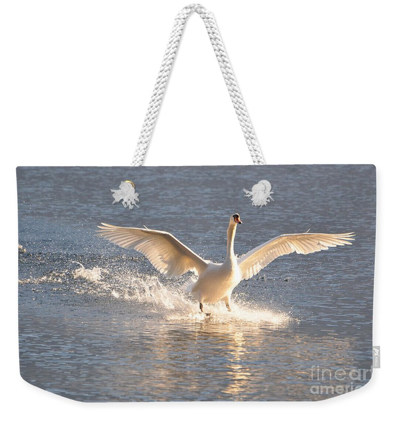 Swan Weekender Tote Bag featuring the photograph Swan Landing by Mats Silvan