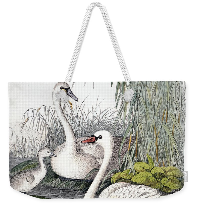 1850 Weekender Tote Bag featuring the photograph Swans, C1850 by Granger