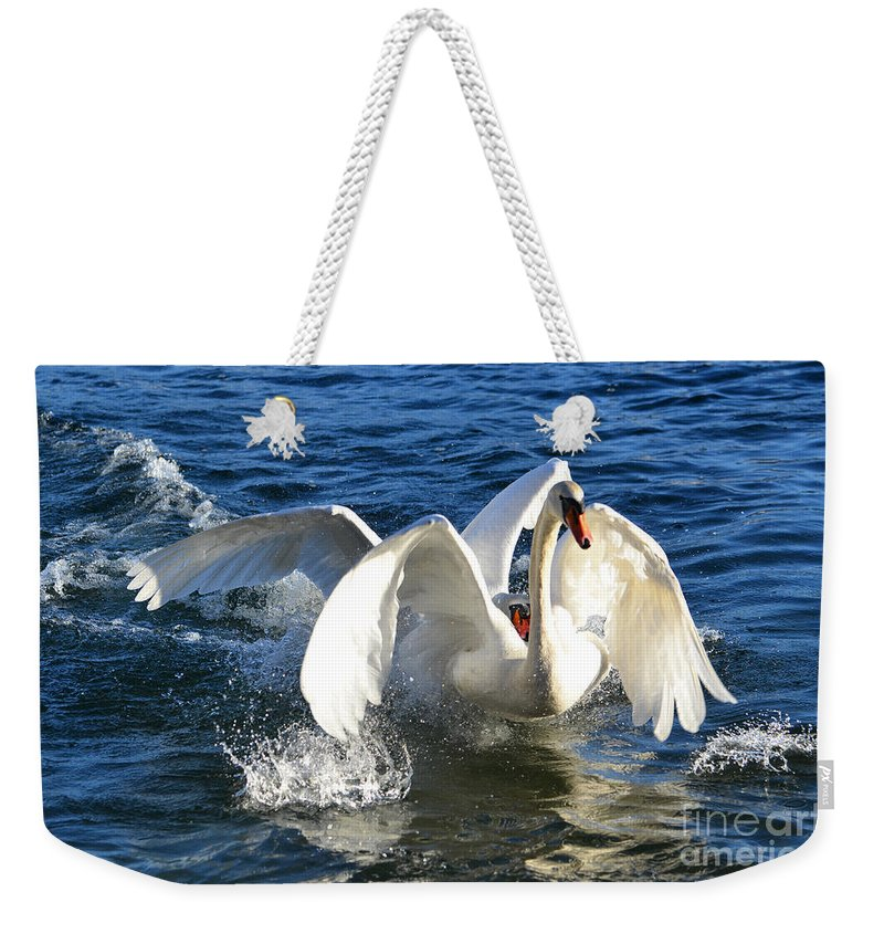 Swan Weekender Tote Bag featuring the photograph Swans Playing by Mats Silvan