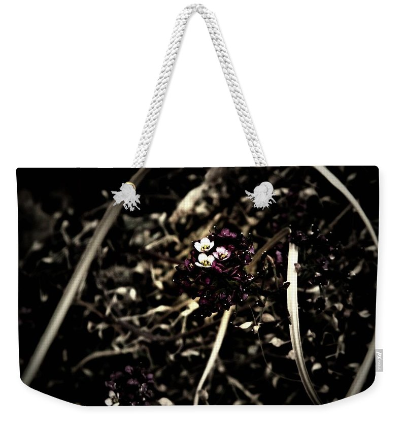 Earthy Weekender Tote Bag featuring the photograph Sweet Alyssum by Chris Berry