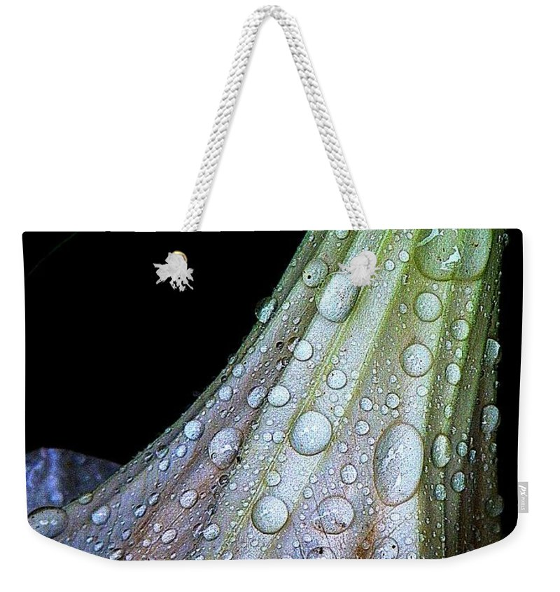 Nature Weekender Tote Bag featuring the photograph Sweet And Rainy by Chris Berry