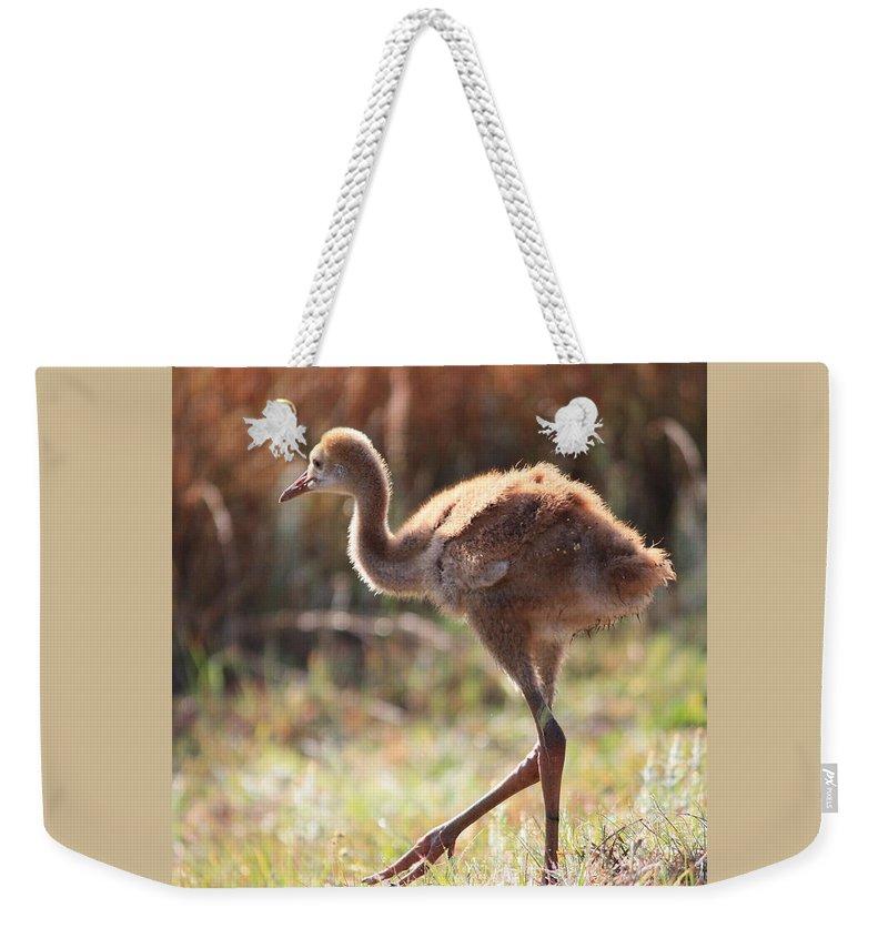 Sandhill Cranes Weekender Tote Bag featuring the photograph Sweet Juvenile Sandhill Crane by Carol Groenen