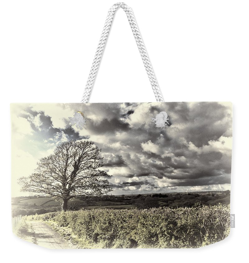 Sycamore Tree Weekender Tote Bag featuring the photograph Sycamore Tree Cream by Steve Purnell