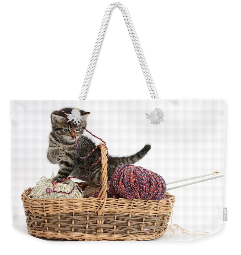 Nature Weekender Tote Bag featuring the photograph Tabby Kitten Playing With Knitting Wool by Mark Taylor