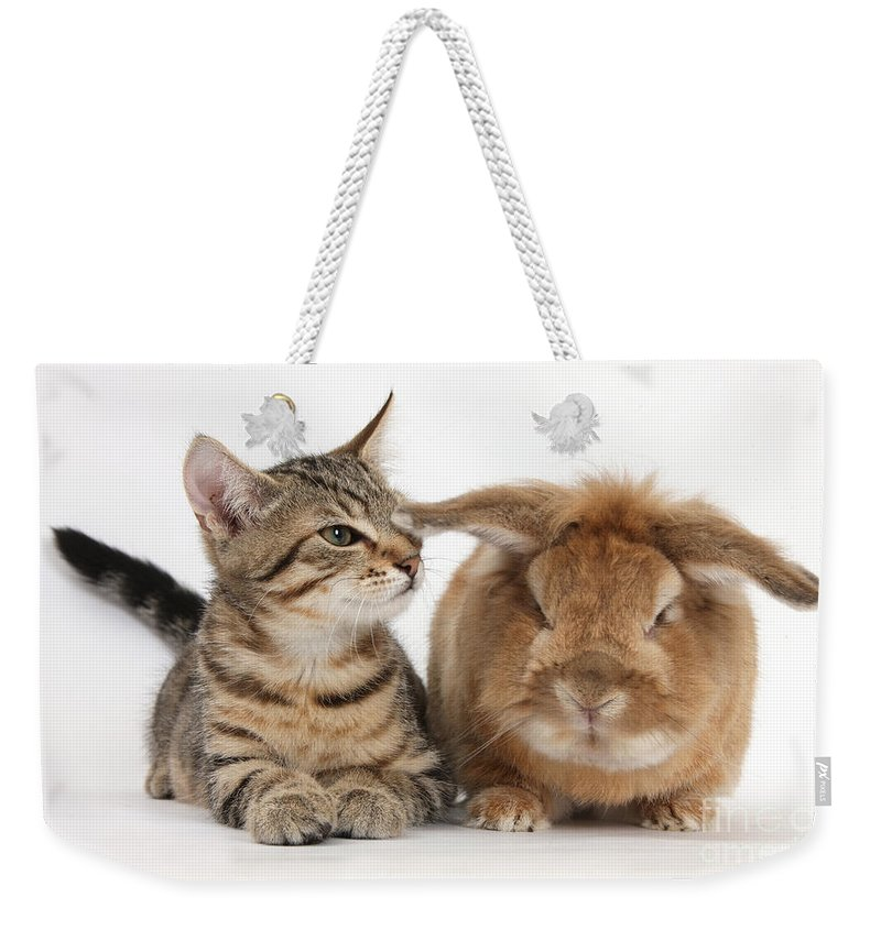 Nature Weekender Tote Bag featuring the photograph Tabby Kitten With Rabbit by Mark Taylor