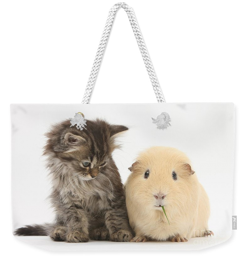 Nature Weekender Tote Bag featuring the photograph Tabby Kitten With Yellow Guinea Pig by Mark Taylor