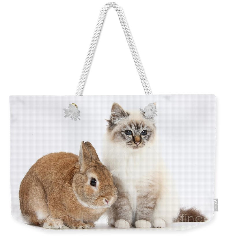 Nature Weekender Tote Bag featuring the photograph Tabby-point Birman Cat And Rabbit by Mark Taylor