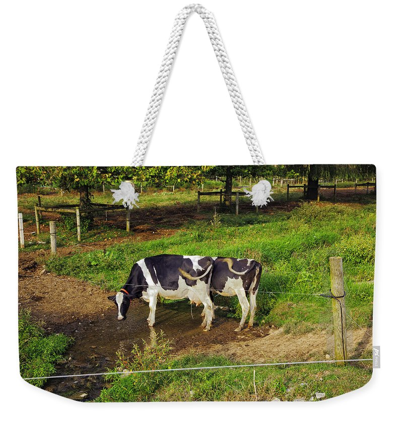 Cow Weekender Tote Bag featuring the photograph Tail Of Two Cows by Madeline Ellis