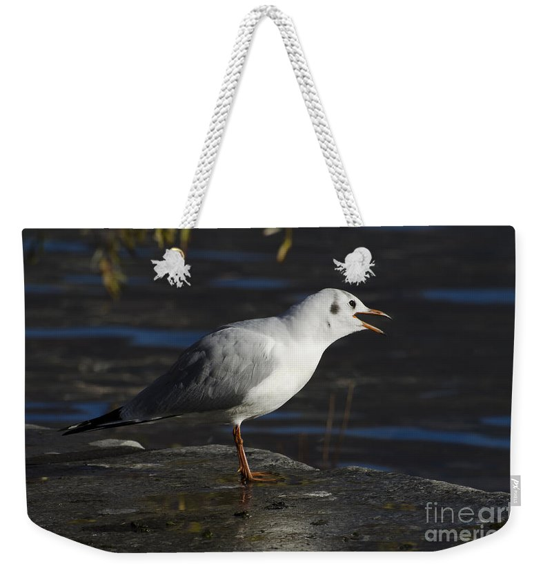 Seagull Weekender Tote Bag featuring the photograph Talking Bird by Mats Silvan