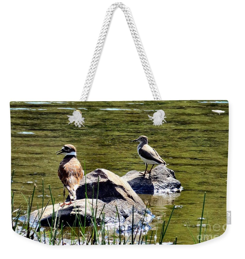 Killdeer Weekender Tote Bag featuring the photograph Teaching The Ropes by Art Dingo