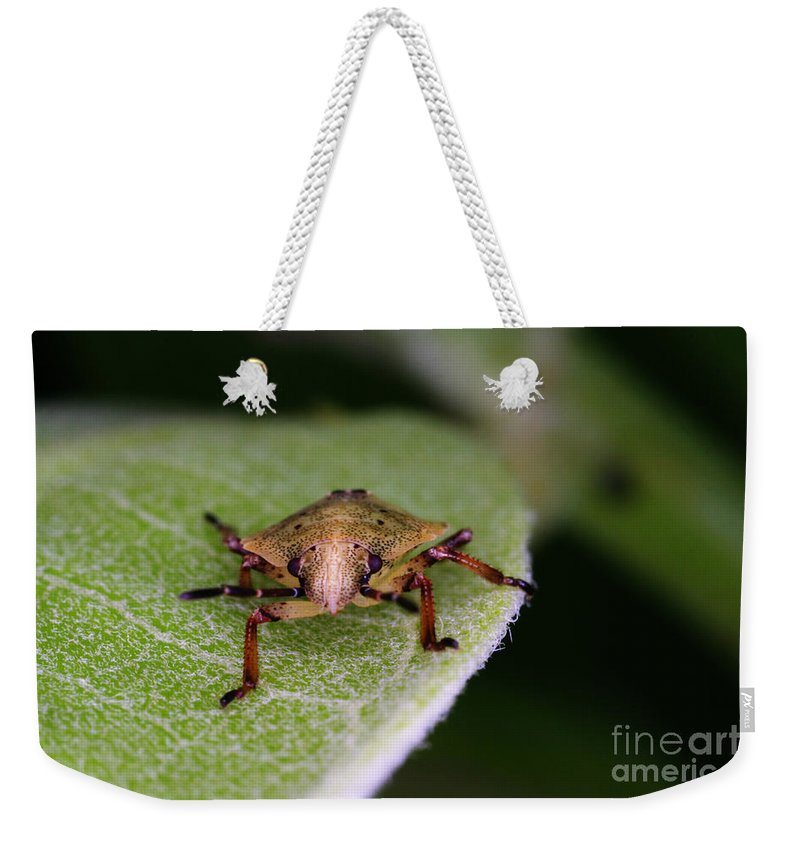 Terrestrial Turtle Bug Weekender Tote Bag featuring the photograph Terrestrial Turtle Bug by Ted Kinsman