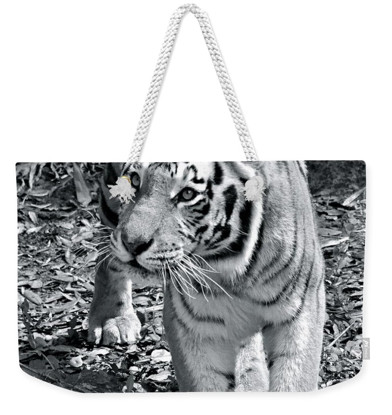 Tiger Weekender Tote Bag featuring the photograph Terrific Tiger by Carol Bradley