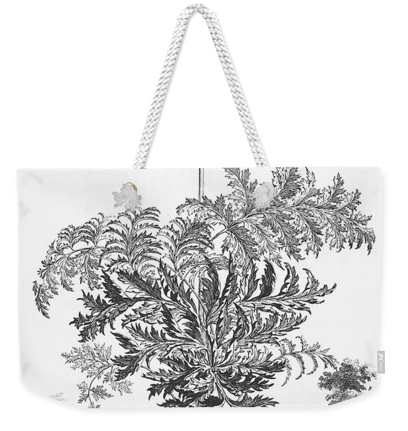 1696 Weekender Tote Bag featuring the photograph Thapsia Major Latifolia by Granger