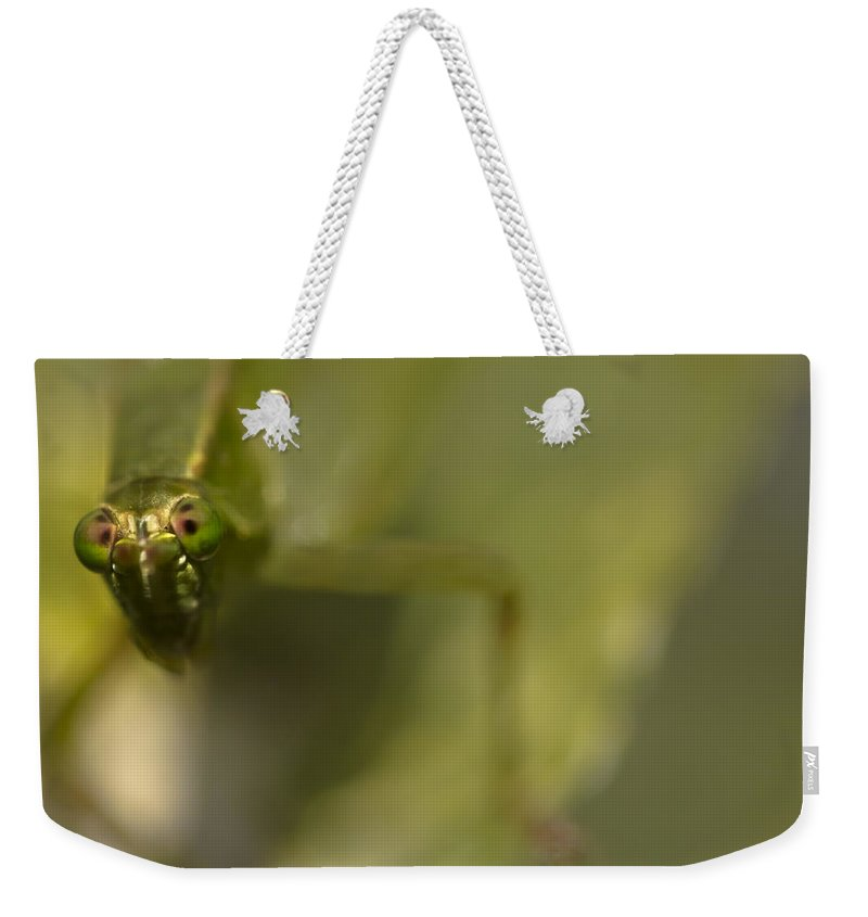 Grasshopper Weekender Tote Bag featuring the photograph That's Close Enough by Kim Henderson