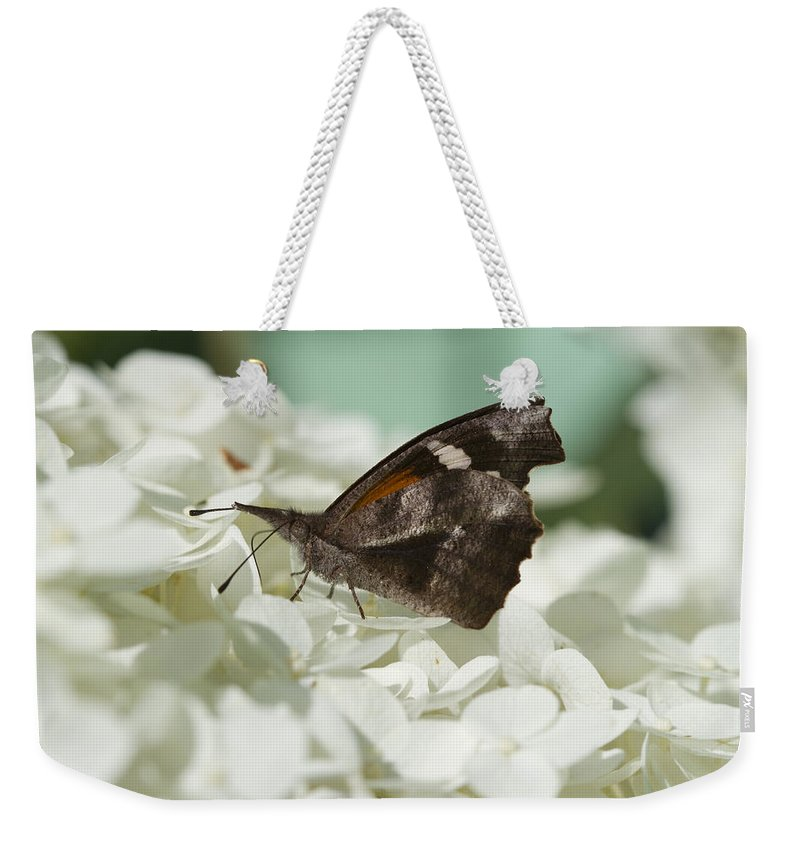 Libytheana Carinenta Weekender Tote Bag featuring the photograph The American Snout - Libytheana Carinenta by Kathy Clark