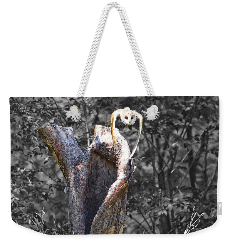 Barn-owl Weekender Tote Bag featuring the photograph The Art Of Flight V2 by Douglas Barnard