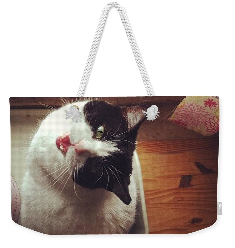 Catsofinstagram Weekender Tote Bag featuring the photograph the Bowl's Empty! #cat by Katie Cupcakes