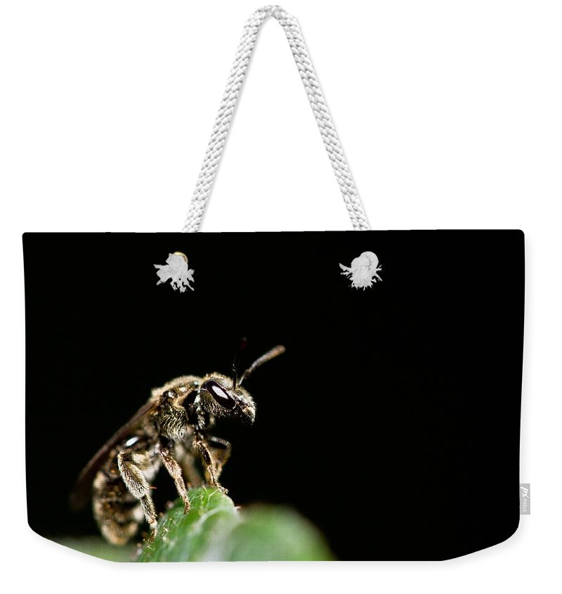 Bug Weekender Tote Bag featuring the photograph The Bug by Danielle Silveira
