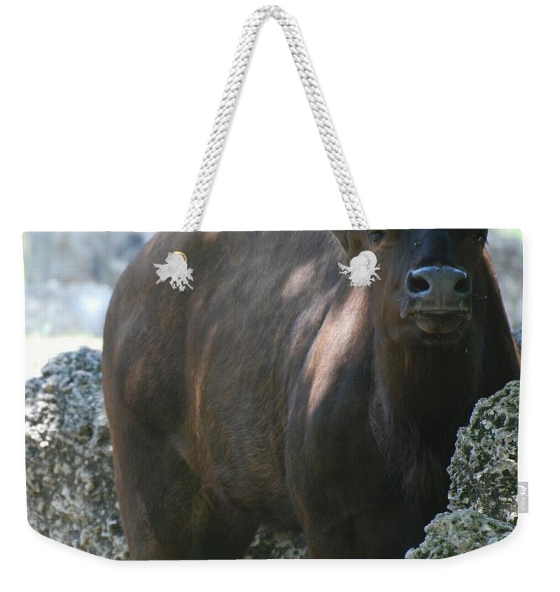 Animal Weekender Tote Bag featuring the photograph The Bull Moose by Rob Hans