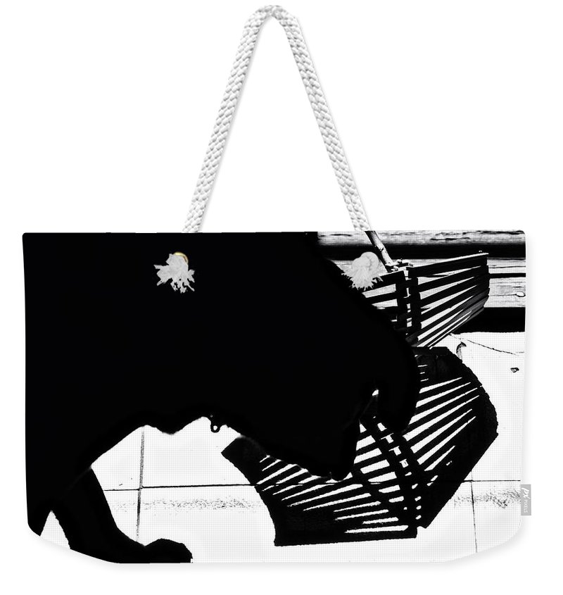 Silhouettes Weekender Tote Bag featuring the photograph The Curious One by Susan Capuano