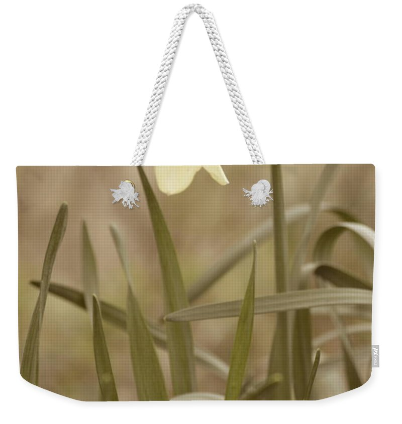 Flower Weekender Tote Bag featuring the photograph The Daffodil In Partial Sepia by JD Grimes