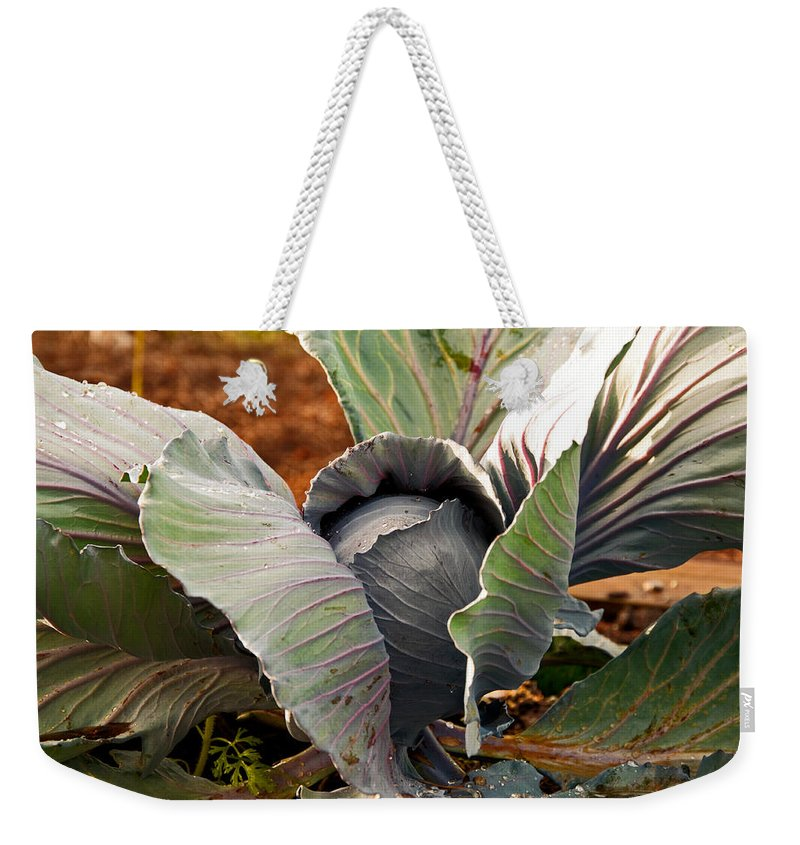 Cabbage Weekender Tote Bag featuring the photograph The Great Cabbage by Christine Stonebridge