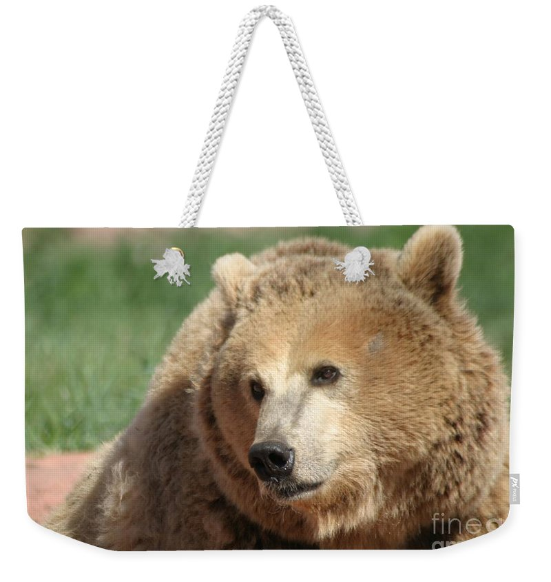 Bear Weekender Tote Bag featuring the photograph The Look by Living Color Photography Lorraine Lynch
