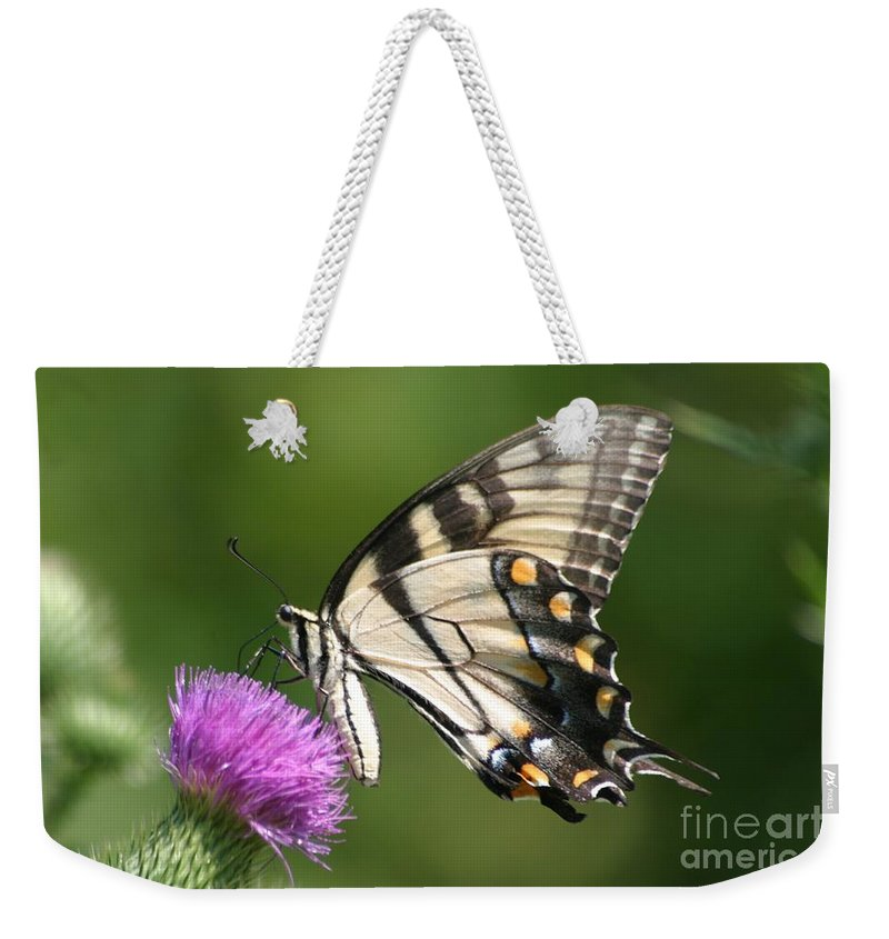 Butterfly Weekender Tote Bag featuring the photograph The Love Of Thistle by Living Color Photography Lorraine Lynch