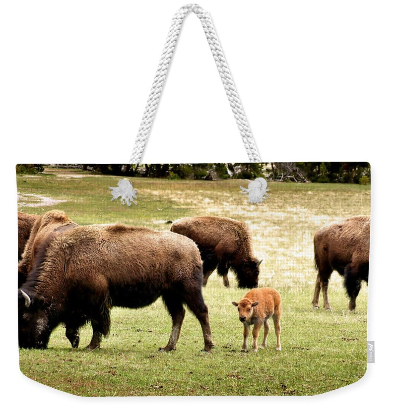 Bison Weekender Tote Bag featuring the photograph The Mighty Bison by Ellen Heaverlo