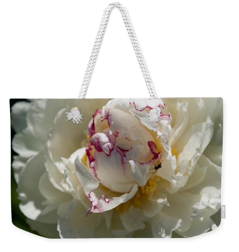 Peony Weekender Tote Bag featuring the photograph The Peony And The Ant by Joanne Smoley