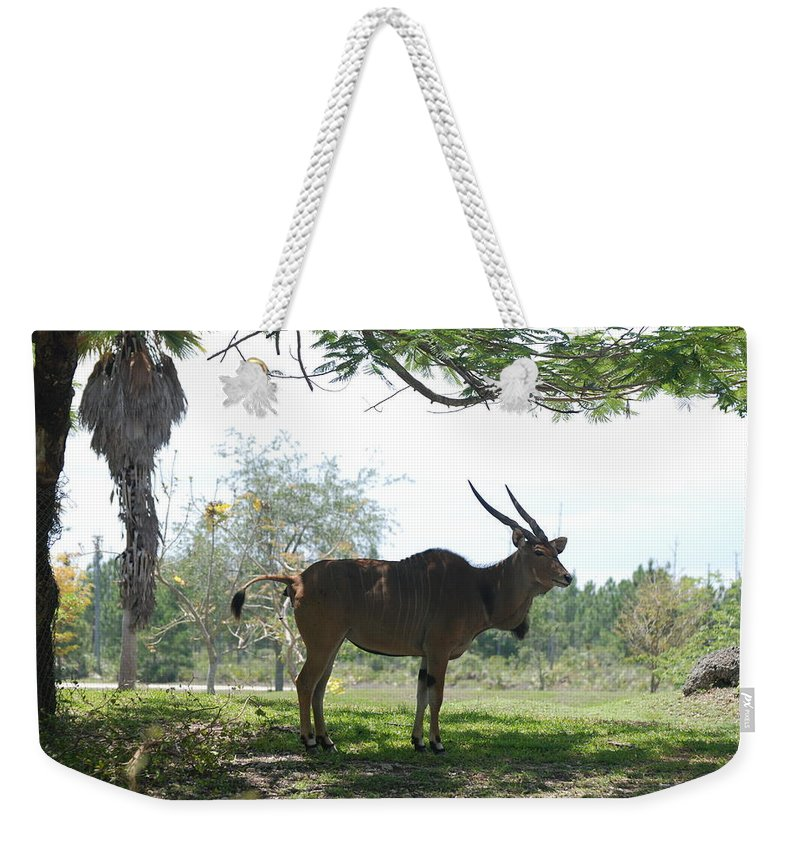 Animal Weekender Tote Bag featuring the photograph The Postcard by Rob Hans