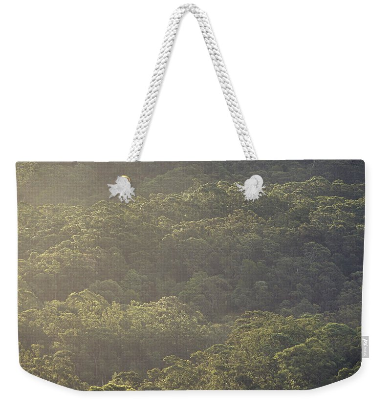 Budderoo National Park Weekender Tote Bag featuring the photograph The Schlerophyll Forest Canopy by Jason Edwards