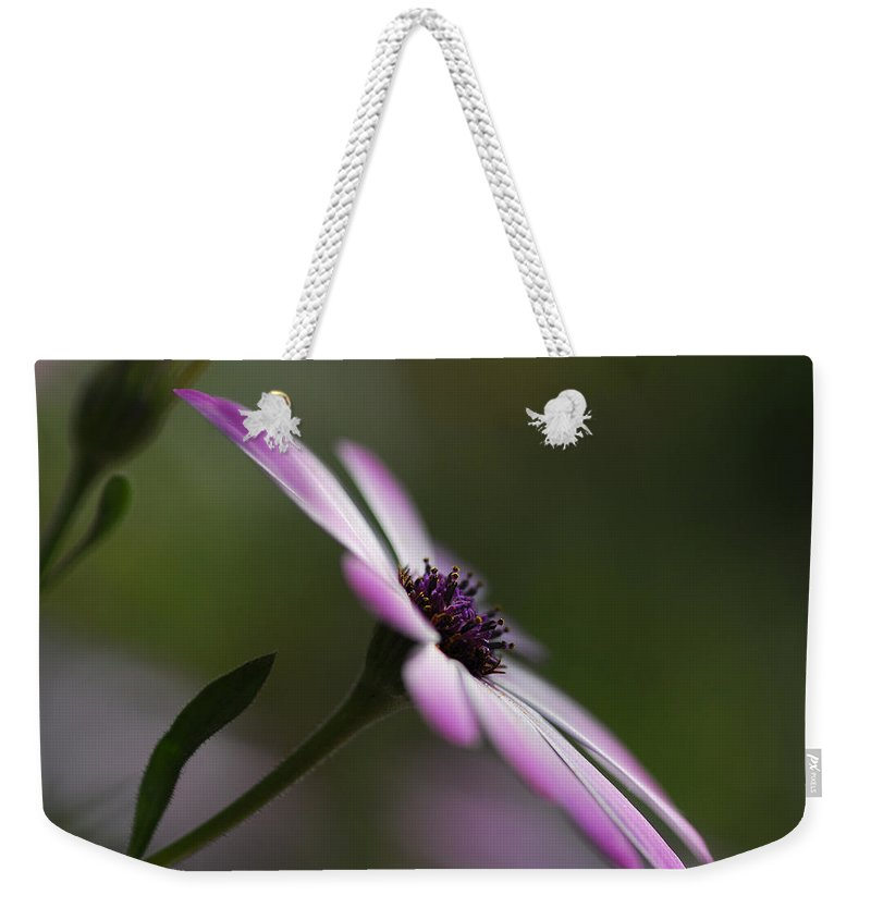Purple Daisy Weekender Tote Bag featuring the photograph The Serenity Of Spring by Saija Lehtonen