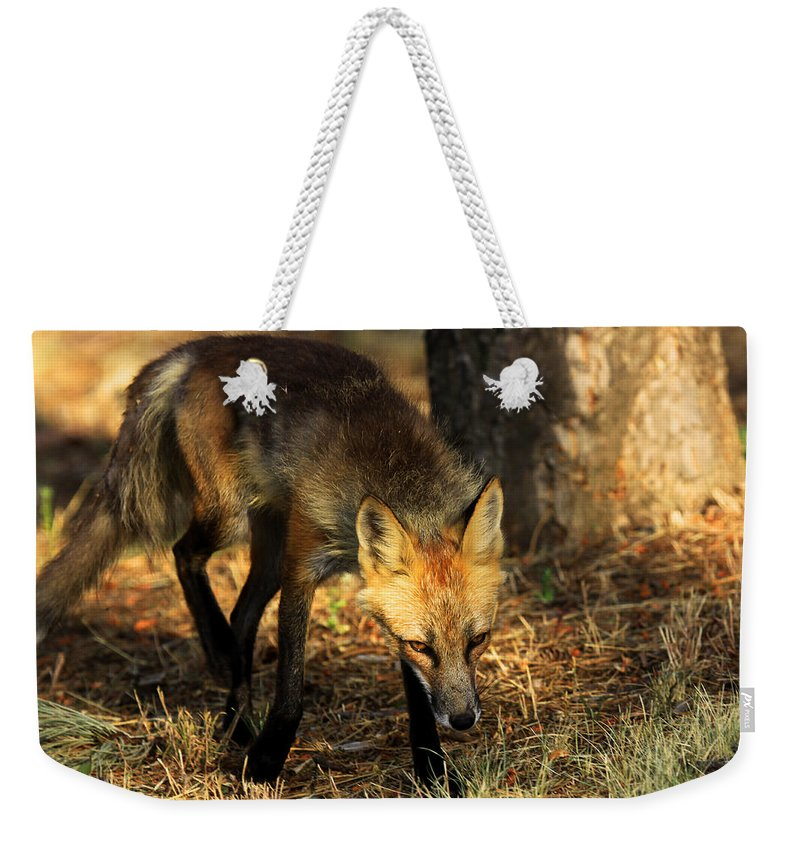 Fox Weekender Tote Bag featuring the photograph The Silent Approach by Jim Garrison