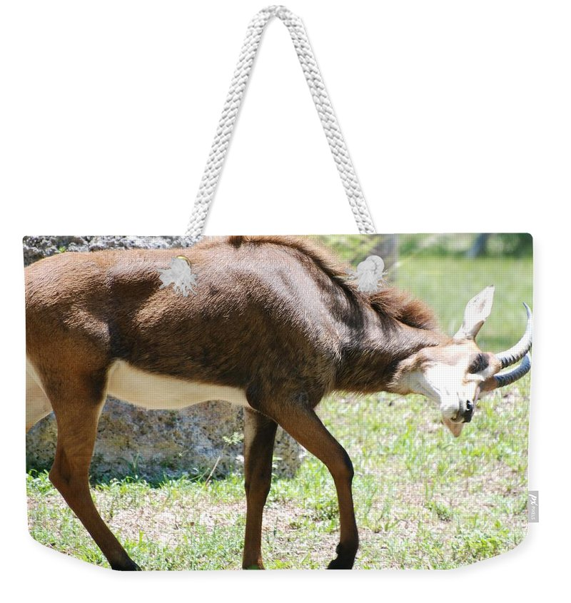 Animal Weekender Tote Bag featuring the photograph The Stance by Rob Hans