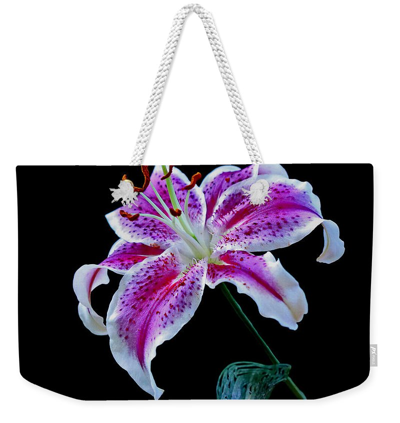 Stargazer Weekender Tote Bag featuring the photograph The Stargazer by Rebecca Morgan