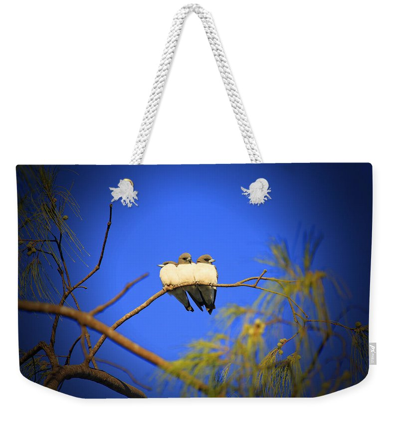 Swallows Weekender Tote Bag featuring the photograph The Three Musketeers by Douglas Barnard
