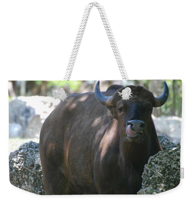 Animal Weekender Tote Bag featuring the photograph The Tounge by Rob Hans