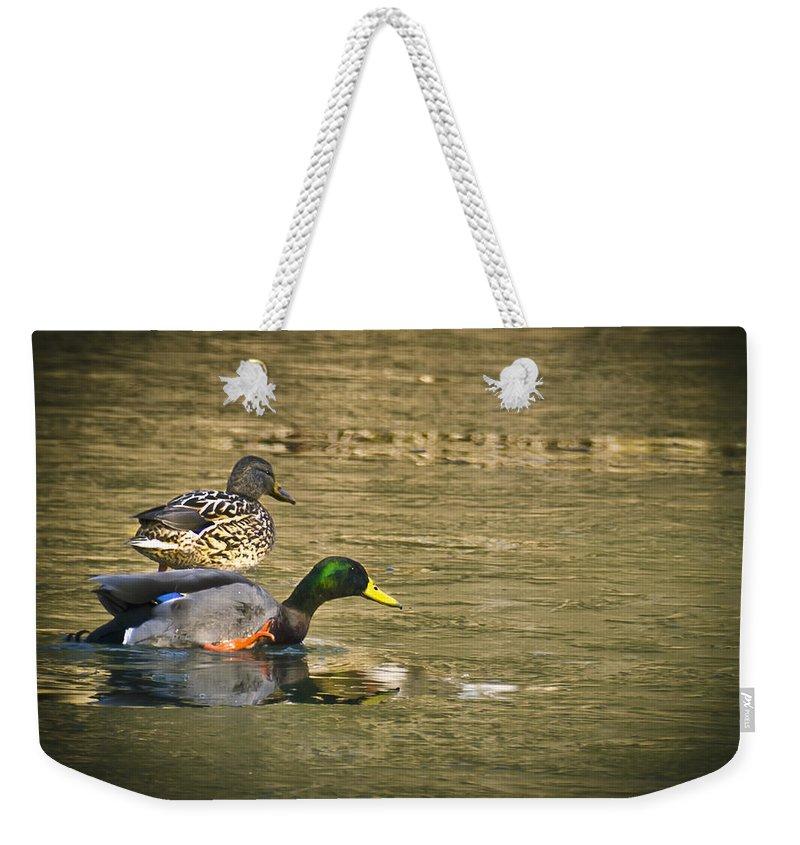 Usa Weekender Tote Bag featuring the photograph Thin Ice Wet Duck by LeeAnn McLaneGoetz McLaneGoetzStudioLLCcom