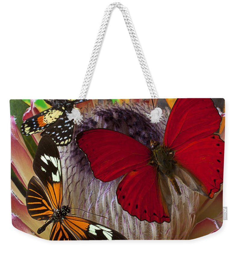 Three Butterflies Protea Weekender Tote Bag featuring the photograph Three Butterflies On Protea by Garry Gay