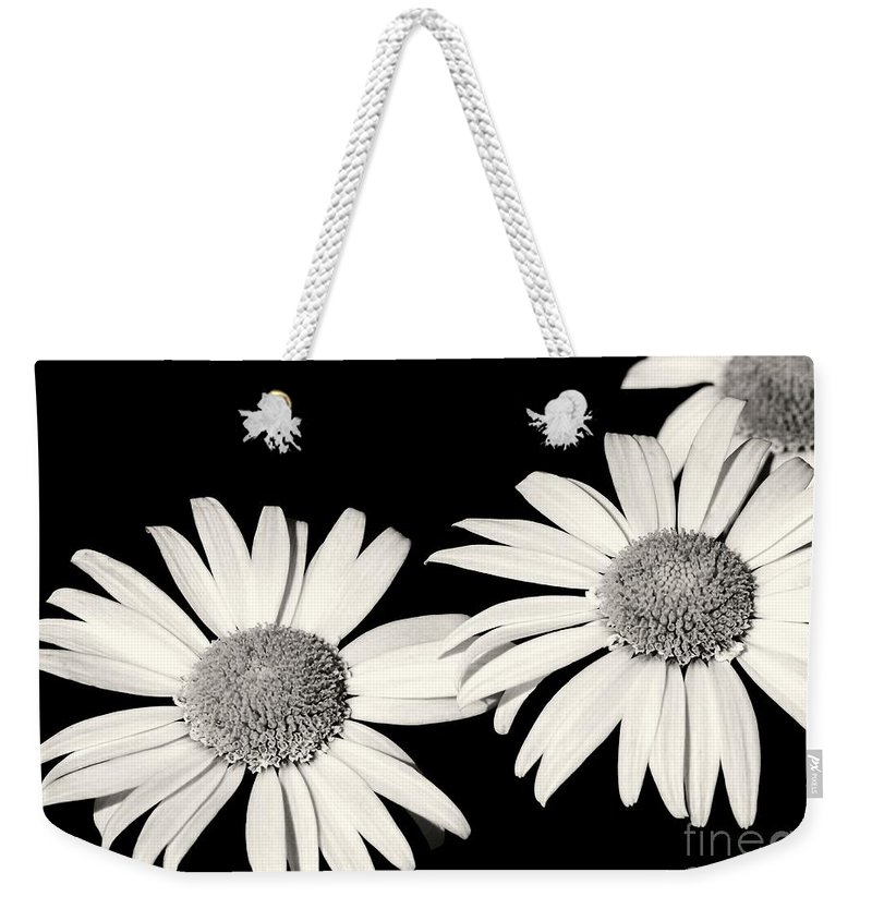 Daisy Weekender Tote Bag featuring the photograph Three Daisy Amigos by Sabrina L Ryan