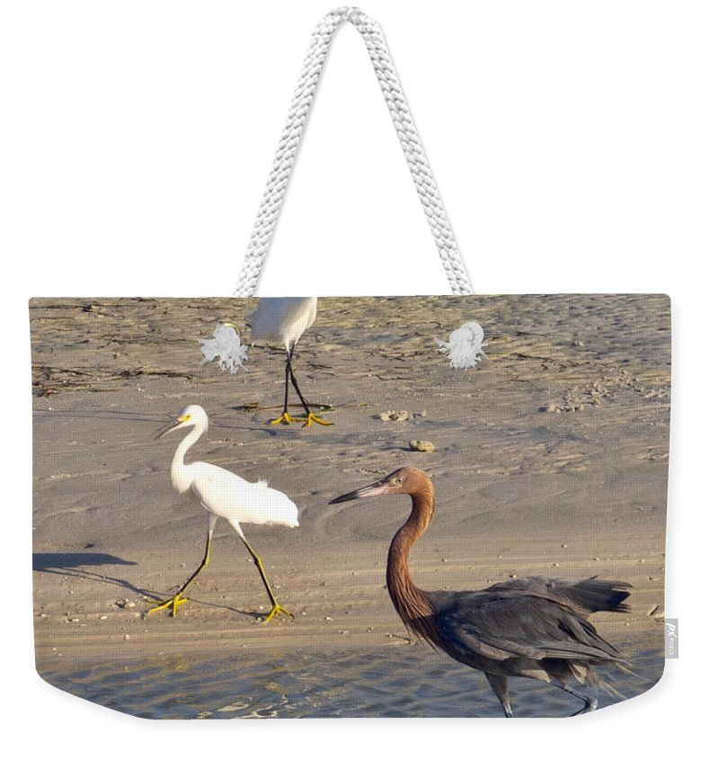 Ruffled Weekender Tote Bag featuring the photograph Three Egrets by Stephen Whalen