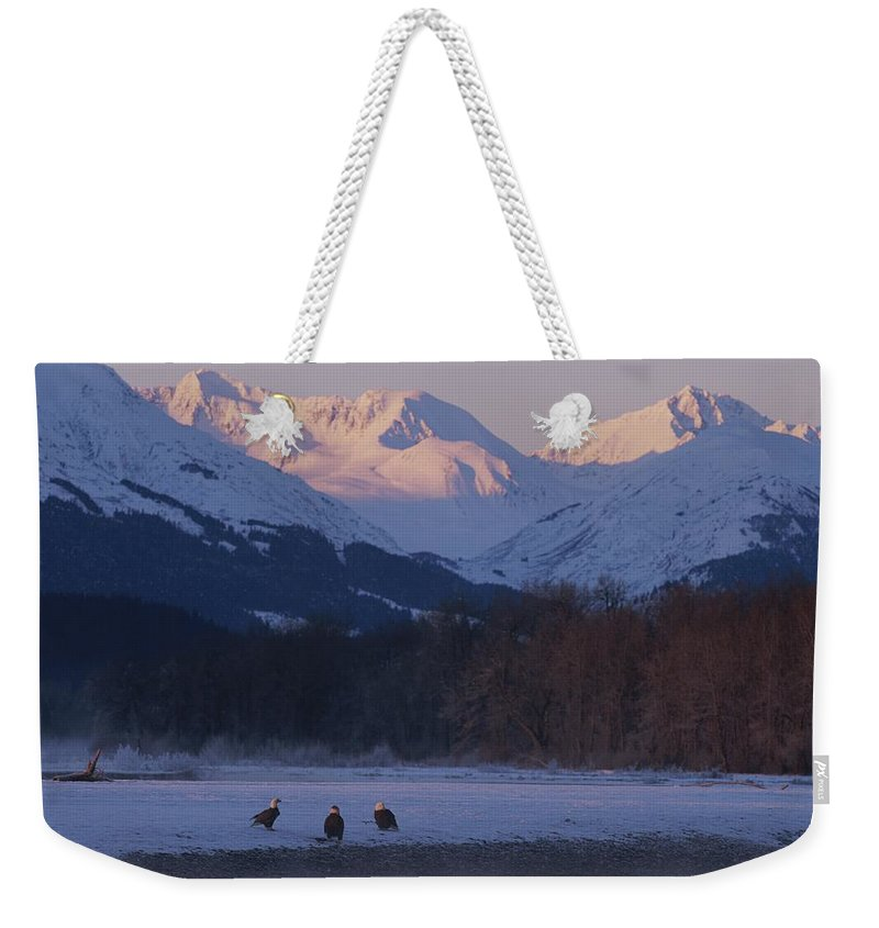 haines Weekender Tote Bag featuring the photograph Three Northern American Bald Eagles by Norbert Rosing
