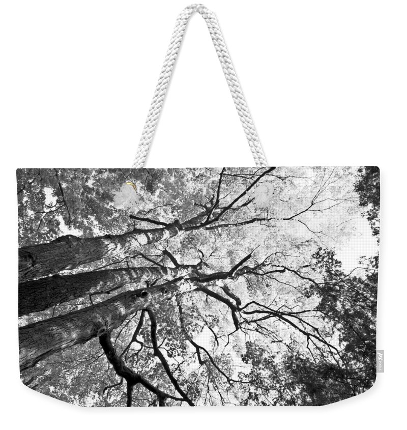 Black Weekender Tote Bag featuring the photograph Three Trees Reach For The Sky Black And White by LeeAnn McLaneGoetz McLaneGoetzStudioLLCcom